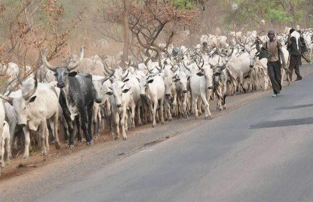 Cattle rustlers raid Niger community, kill six