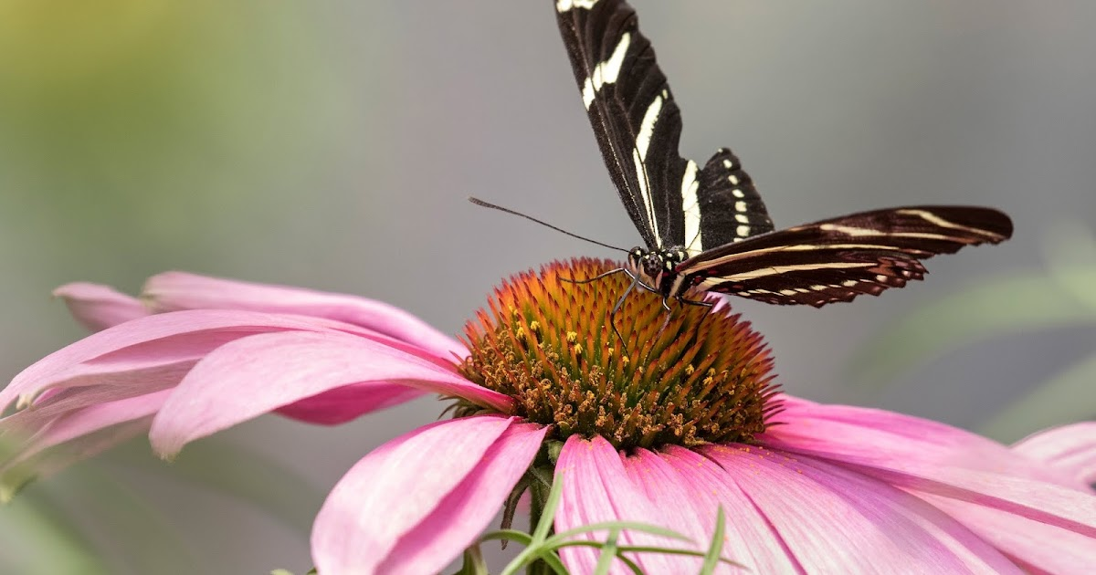 Woodland Park Zoo Blog Perfect Plants For A Pollinator Friendly Garden