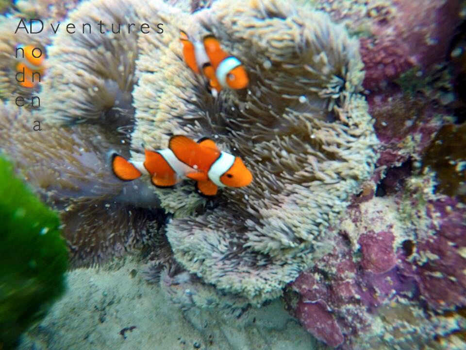 Calachuchi Coral Garden Coron Palawan
