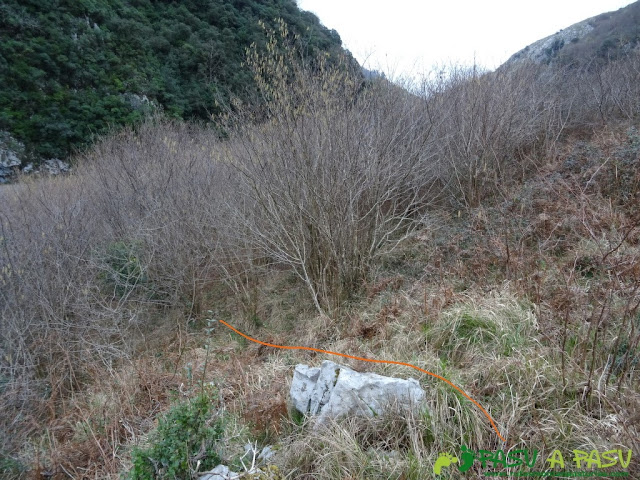 Ruta a la Pica de Peñamellera: Atravesando zona de bosque bajo