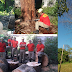 12º BBM: Bombeiros Militares da Cidade de Goiás realizam corte de Árvore