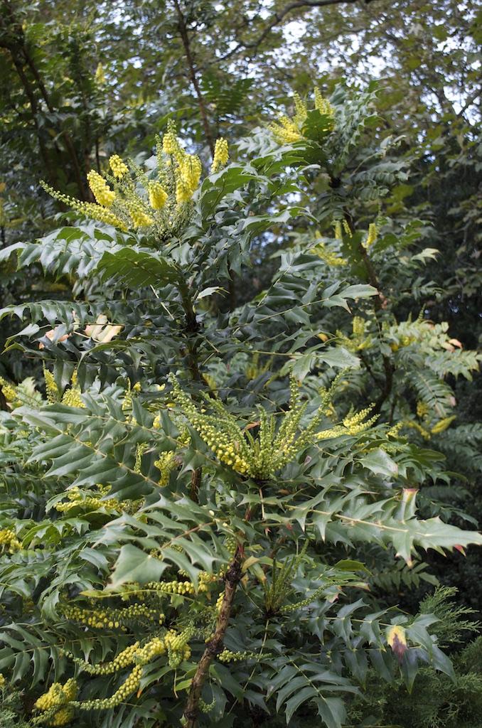 Arbustes de terre de bruyere vrai ou faux - Terre de bruyere ...