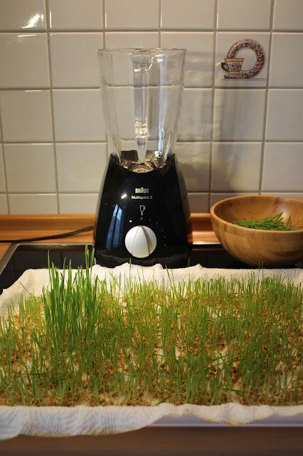 Weizengras entsaften
