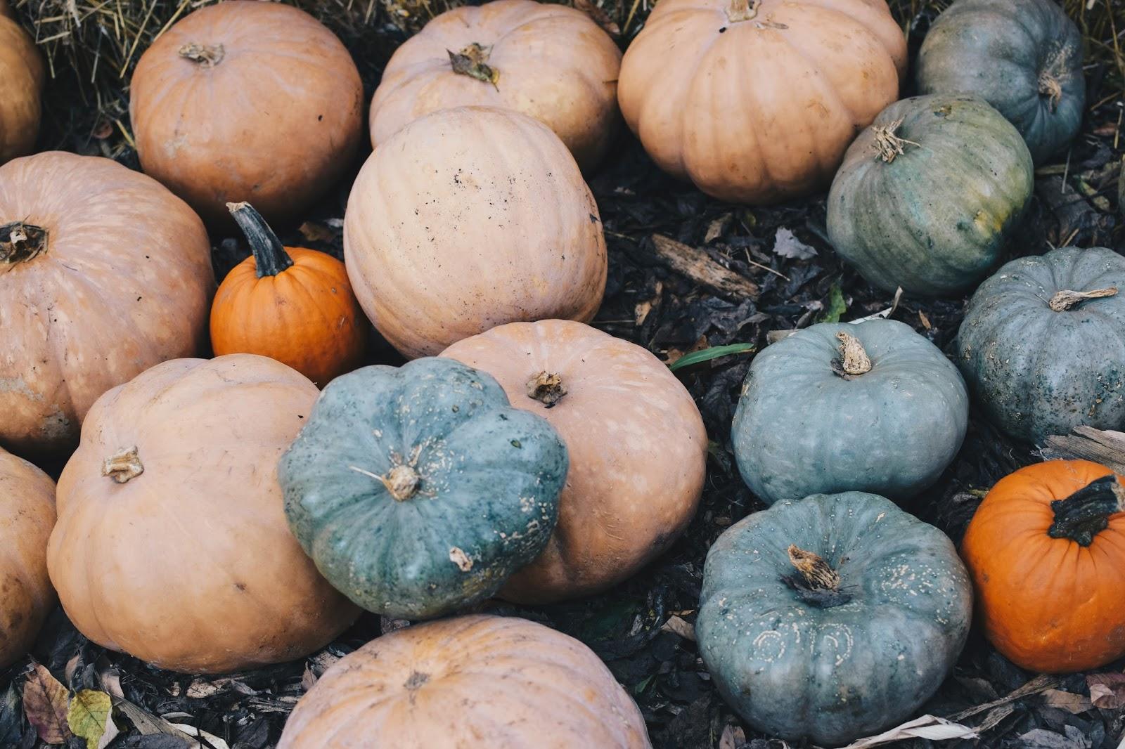 pumpkins at cheekwood estate & gardens