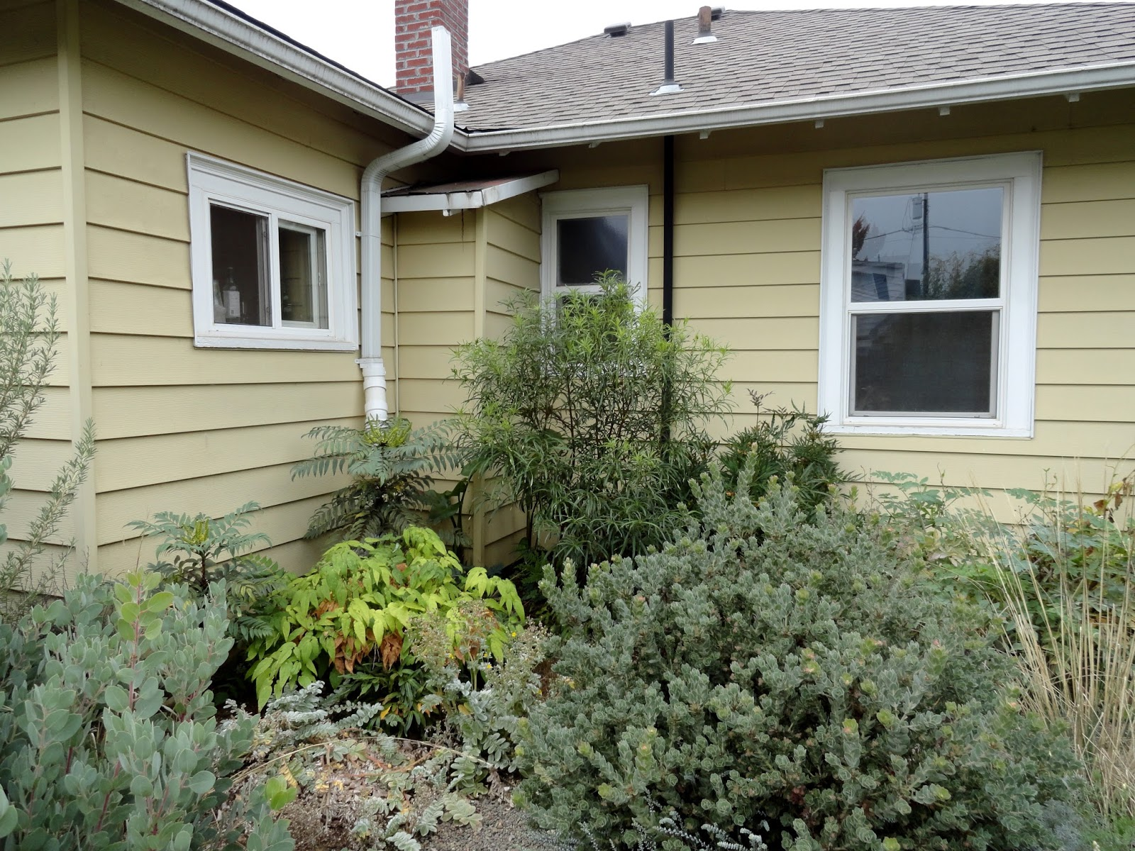 danger garden: Garden Visit! Greg Shepard of Xera Plants, at home...