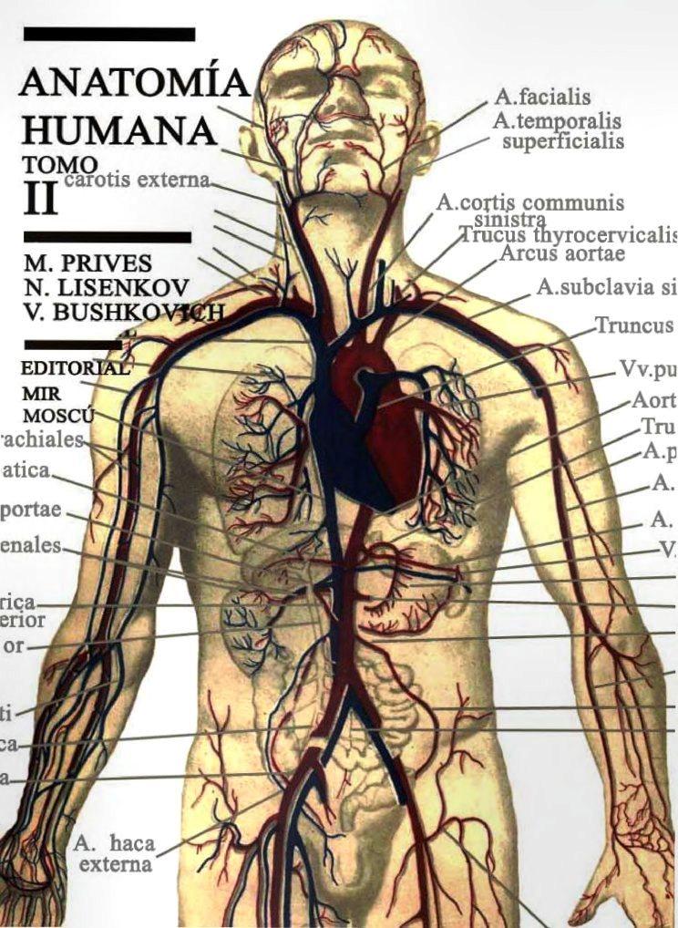 Anatomía humana, Tomo II - M. Prives | FreeLibros