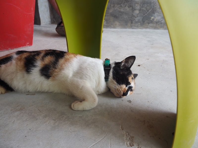 Kitty City, Lanta Animal Welfare