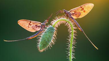 Naturaleza en macro. Fotos de plantas premiadas en IGPOTY N.12 Macro Art