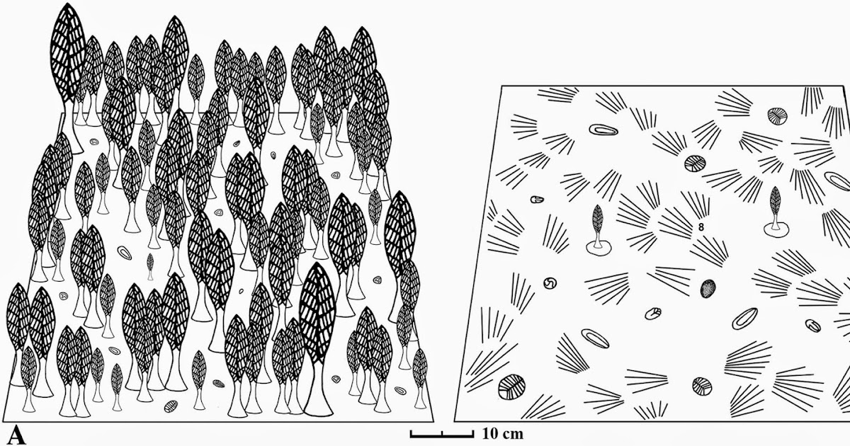 The Dragon's Tales: Reconstructions of two Ediacaran
