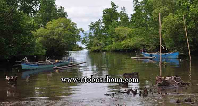 23 Fungsi Hutan Mangrove Beserta Manfaatnya