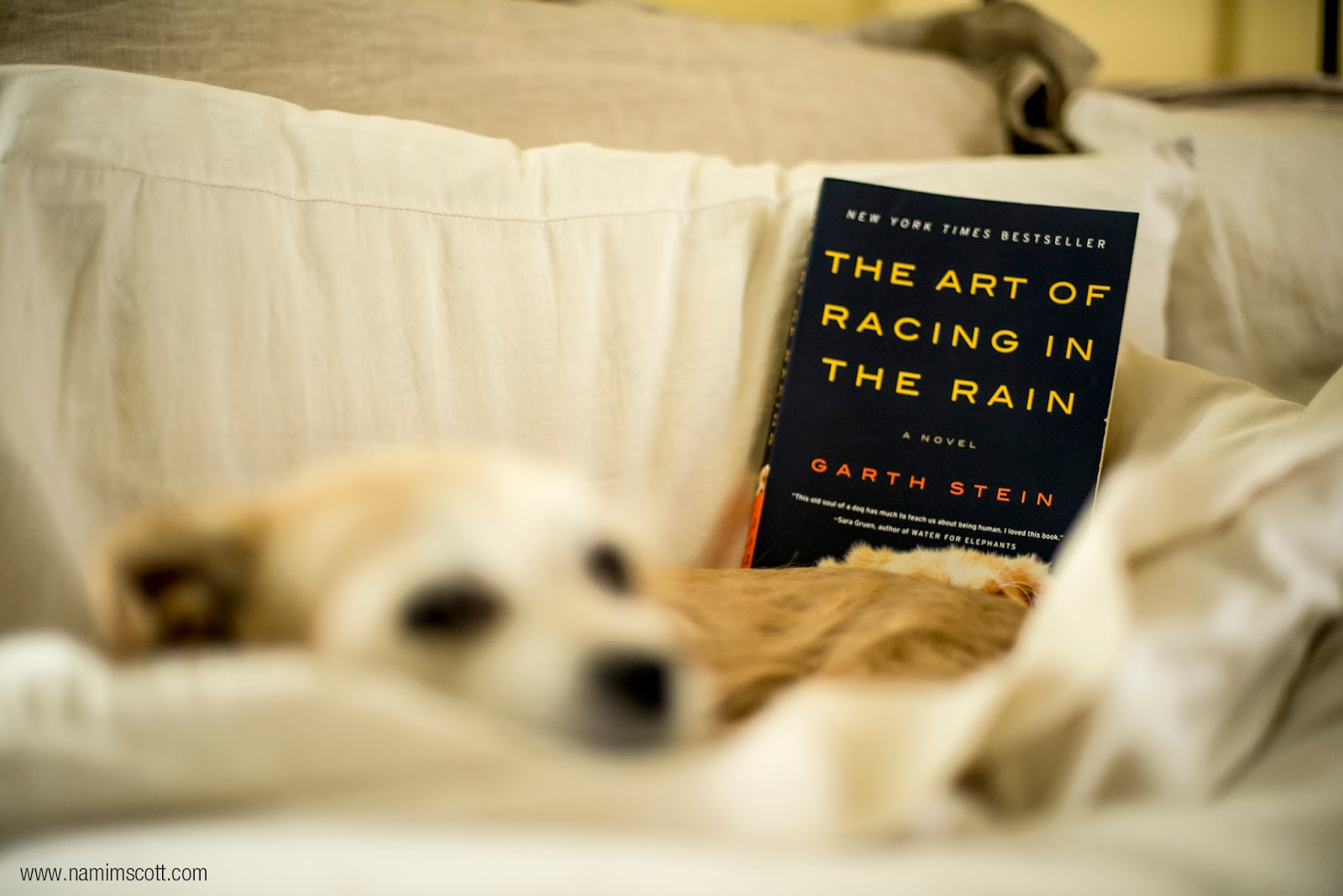 The Art Of Racing In The Rain: Nami M. Scott: Life Enthusiast: Brain Food: The Art Of