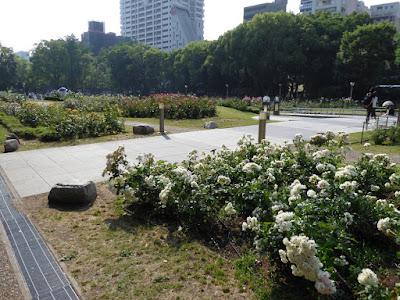 靭公園 セレッソ 日本 確実園