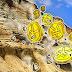 Dự Trữ Ngoại Hối Của Trung Quốc Giảm 80 Tỷ USD, Bitcoin Khả Năng Sắp Tăng Giá (17/11/2016)
