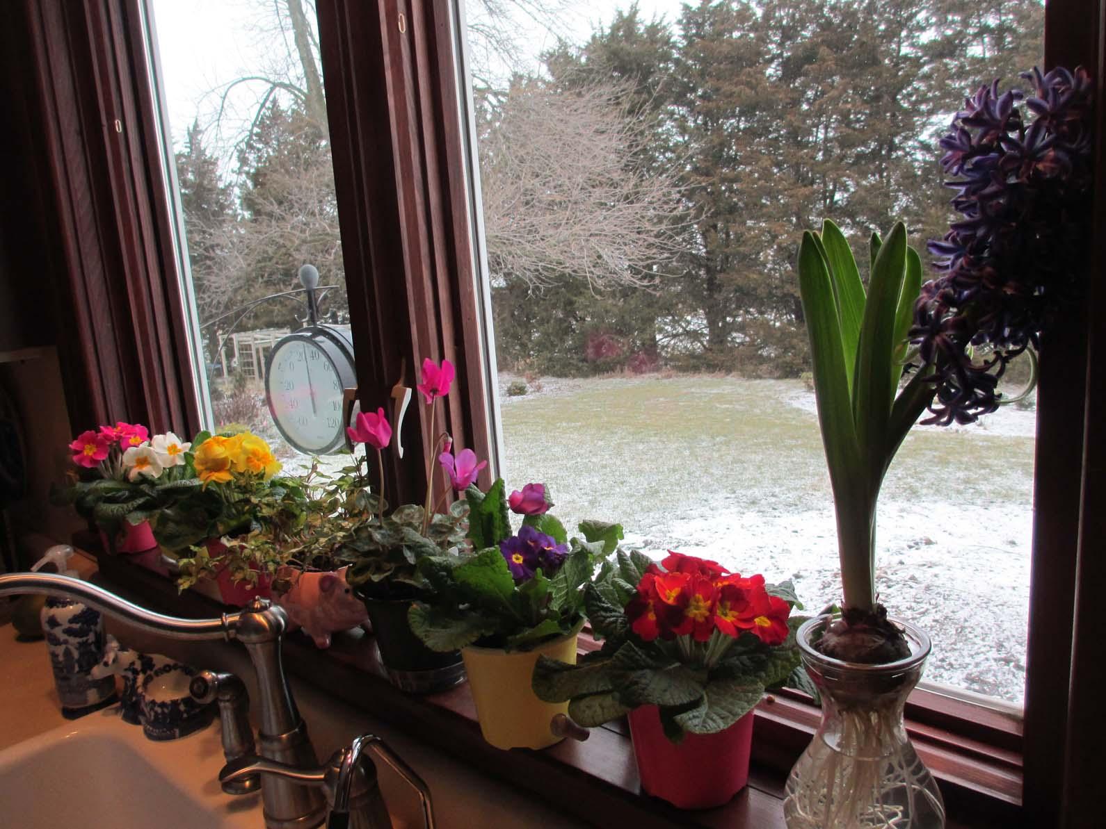 garden fancy february report
