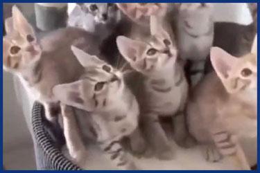 Lustige Katzen im Herbst