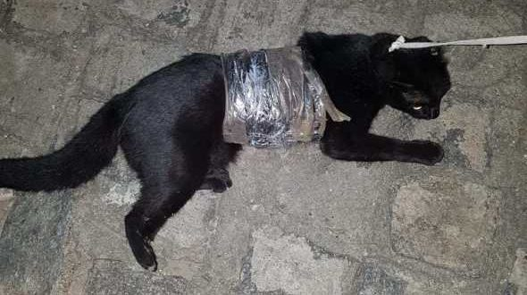 Gato é apreendido ao tentar entrar com drogas em presídio na PB