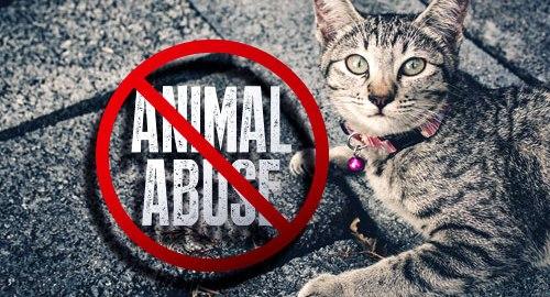 Kekerasan terhadap Hewan