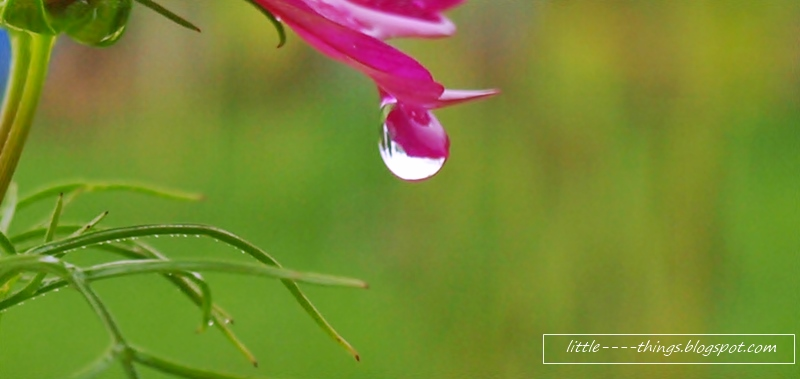raindrop on a flower