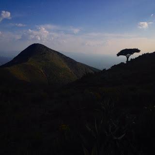 """Único árbol que queda en el Cerro Quemado en el desierto de la Sierra de Catorce. Según documentos históricos cuando se abrió la mina de plata en 1775 esta sierra estaba cubierta de bosques. Cincuenta años después, en 1825, las crónicas dicen que """"no quedaba ni un árbol ni un matorral""""."""