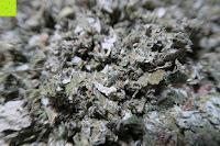 Blätter getrocknet: JoviTea® Himbeerblättertee BIO 80g z.B. zur Unterstützung der Geburtsvorbereitung - 100% natürlich und ohne Zusatz von Zucker. Aus Biologischem Anbau. Zutaten: Himbeerblätter