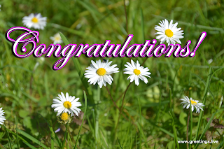 congratulations images nature greetings collections with daisy flowers.