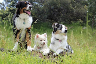 5 Will County Forest Preserve Dog Parks