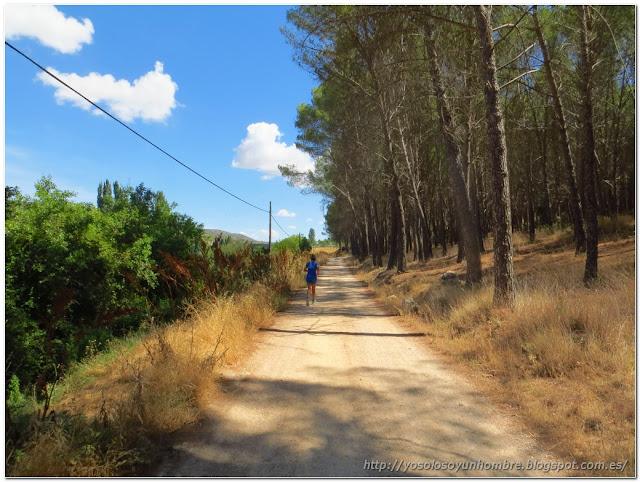 Camino de tierra por debajo del pinar, al otro lado, la vía verde