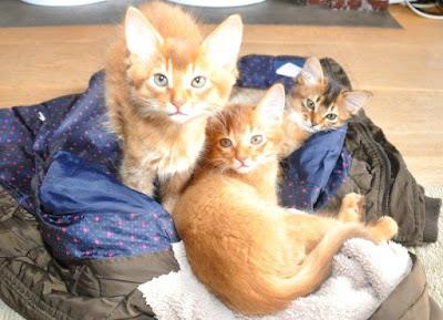 Kitty Jewel x Bashiir