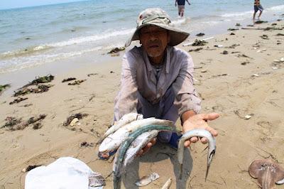 Vietnam investigates mass fish deaths