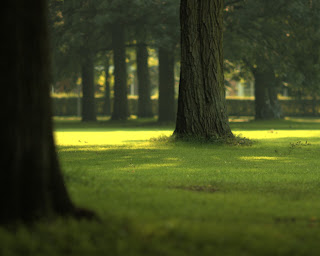 Mavis Fitzpatrick: forest