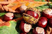 recoger frutos de otoño con niños
