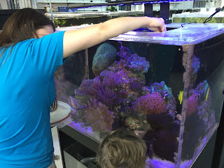 fish store staff feeding the tropical fish