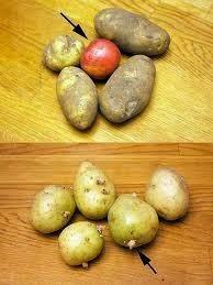 http://2.bp.blogspot.com/-bIVxuzEo7tA/VBo_lRw2-II/AAAAAAAABb8/Cjav6h80acs/s1600/Potato+and+apple.jpeg