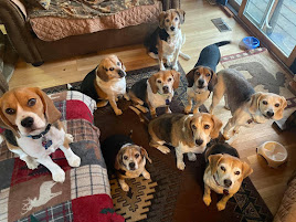 Hank, Spot, Winston, Charlie, Cooper, Snoopy, Lilly, Macy and Lucy.