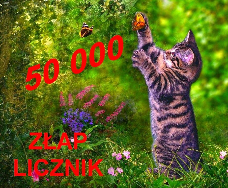 http://misiowyzakatek.blogspot.com/2014/07/apiemy-50-000.html