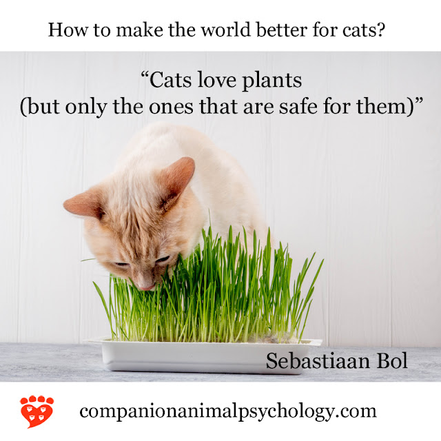 A better world for cats - Sebastiaan Bol. Part of Companion Animal Psychology News