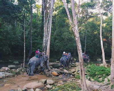 Koh Samui Elephant Trekking camp at Namuang Waterfall No.1 (Namuang Jungle Trip Elephant Trekking)