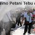 Kesal, Para Petani Tebu yang Demo Hamburkan Gula Impor di Jalanan