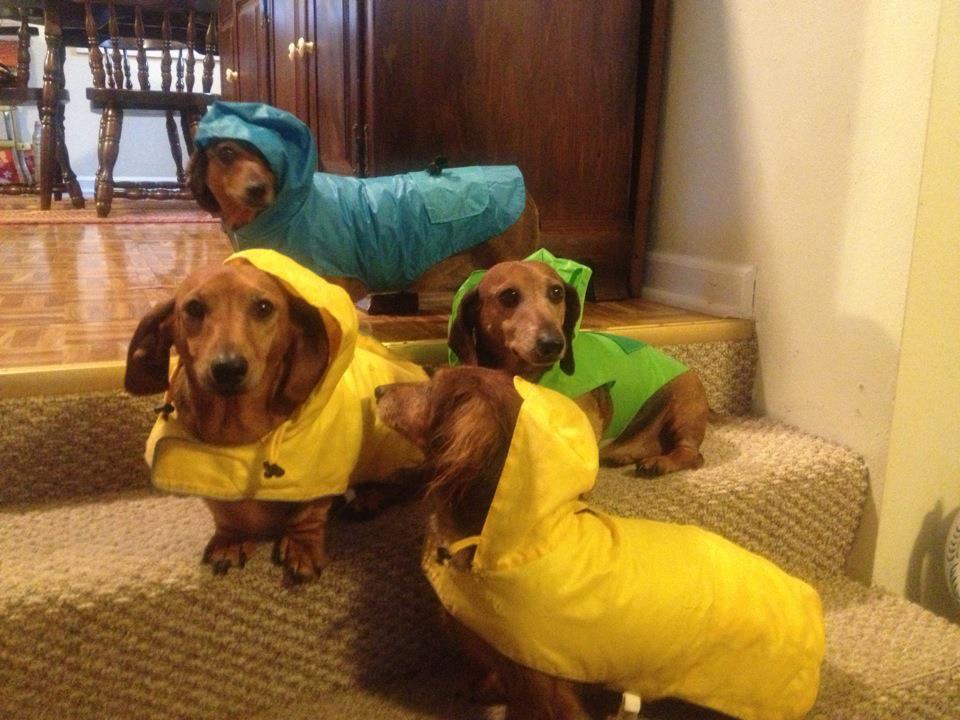 Cute Dogs Part 105 50 Pics Amazing Creatures