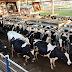 Produção brasileira de leite deverá voltar aos 35 bilhões de litros