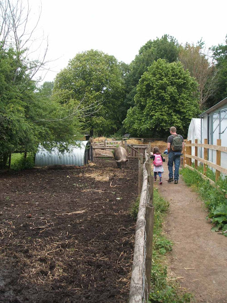 Father and daughter enjoy wandering past the friendly pig at windmill hill city farm in bristol