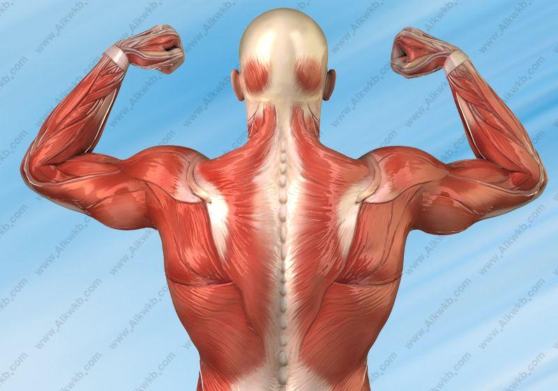 Sport Destroys Muscles