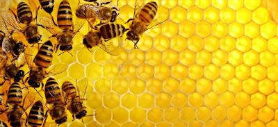 Soal Biologi : 70 Pilihan Ganda Bab Hewan Invertebrata & Jawaban