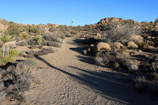 Walking east on Desert Queen Mine Trail, Joshua Tree National Park