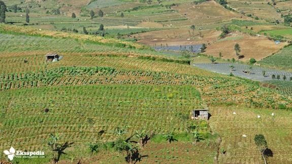 Pertanian Lereng Gunung Sumbing
