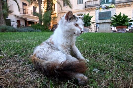 stray cats spain