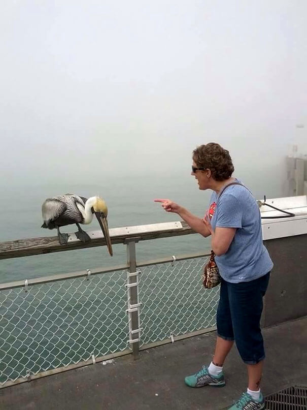 20 Hilarious Photos Of Grandparents Being Awesome - My Grandmother Got Bit By A Pelican On The Pier And Then Started To Scold It