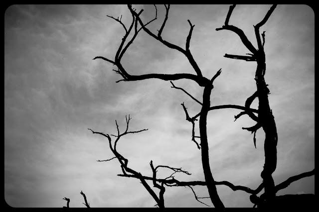 Drzewo. Piktorializm. Koncepcyjna fotografia krajobrazu. fot. Łukasz Cyrus