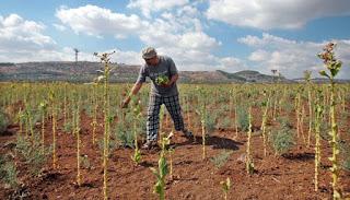 Lahan Pertanian Warga Palestina