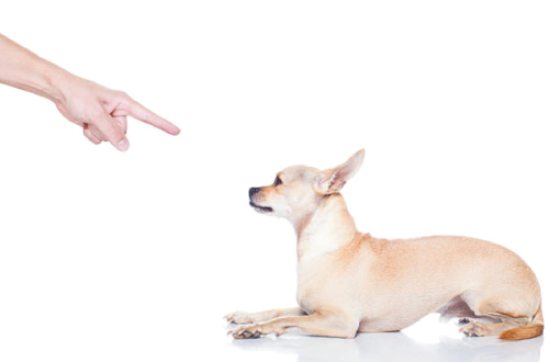 hand pointing at dog